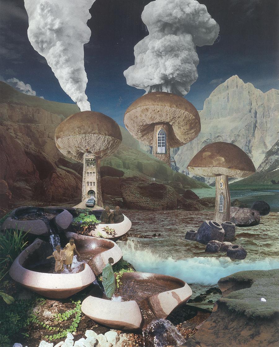 untitled-mushroom-seana-gavin